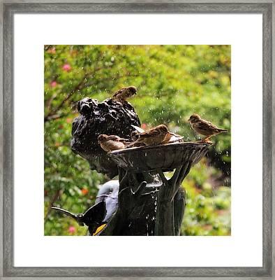 Burnett Bird Bath Framed Print by Jessica Jenney