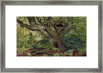 Burnham Beeches Framed Print by James Matthews