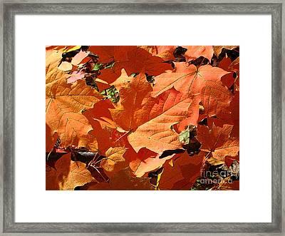 Burnt Orange Framed Print by Ann Horn