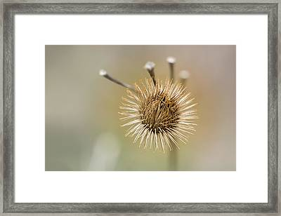 Burr 2 Framed Print by Peter Scott