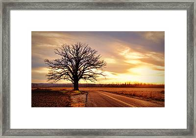 Burr Oak Silhouette Framed Print by Cricket Hackmann
