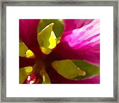 Burst Of Spring Framed Print by Amy Vangsgard