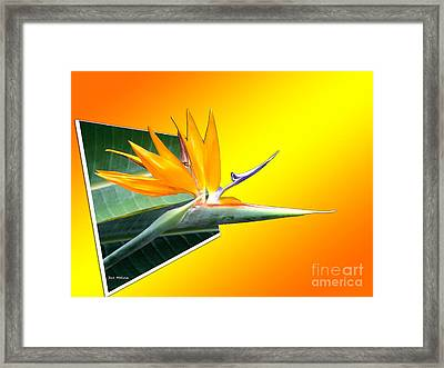 Bursting Out Of The Box Framed Print by Sue Melvin