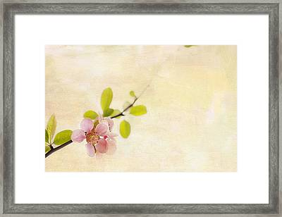 Bursting Out Framed Print by Rebecca Cozart