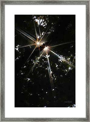 Bursting Through Trees Framed Print by Donna Blackhall
