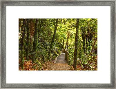 Bush Pathway Waikato New Zealand Framed Print by Colin and Linda McKie