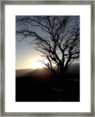 Bushveld Sunset Framed Print by Kayla Barnard