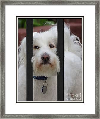 Busted Framed Print by Ella Kaye Dickey