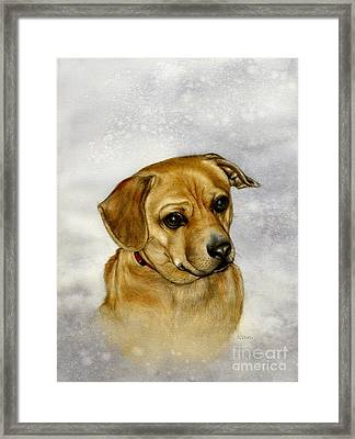 Buster Framed Print by Nan Wright