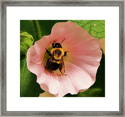 Busy Bee Framed Print by Al Fritz