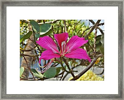 Busy Bee Framed Print by Mindy Sue Werth