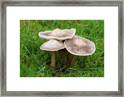Butter Cap Framed Print by Nigel Downer