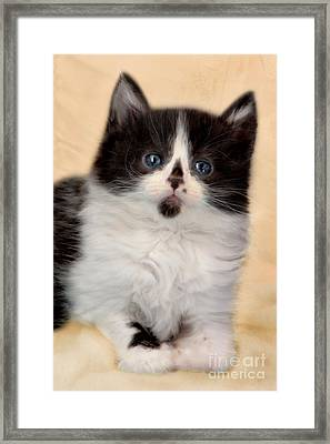 Butter Wouldnt Melt Framed Print by Linsey Williams