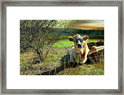 Buttercup Framed Print by Diana Angstadt