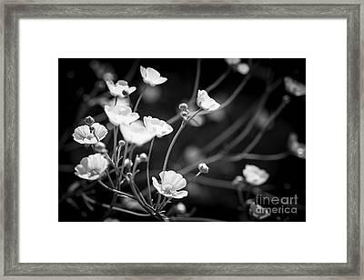 Buttercups Framed Print by Elena Elisseeva
