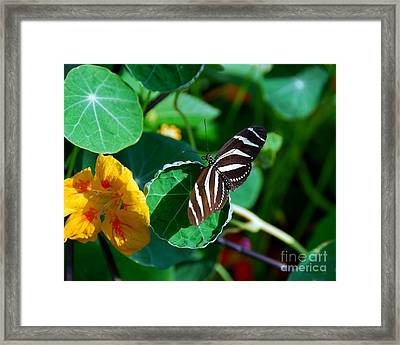 Butterflies Are Free Framed Print by Mel Steinhauer