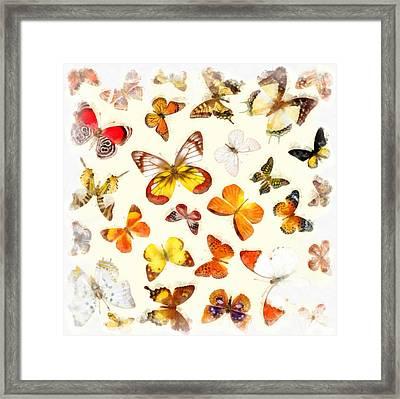 Butterflies Square Framed Print by Edward Fielding