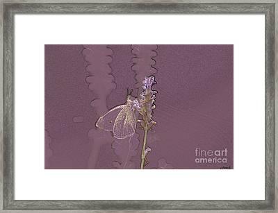 Butterfly 3 Framed Print by Carol Lynch