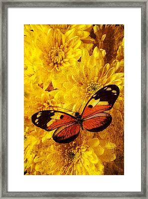 Butterfly Abstract Framed Print by Garry Gay