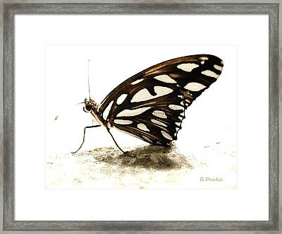 Butterfly Afterlife Framed Print by Barbara Drake