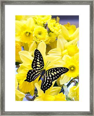 Butterfly Among The Daffodils Framed Print by Edward Fielding