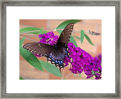 Butterfly And Friend Framed Print by Luther   Fine Art