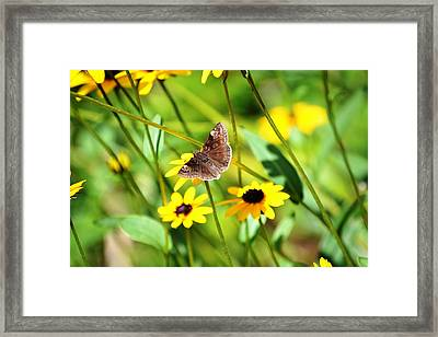 Butterfly And Yellow Flowers Framed Print by Carlee Ojeda