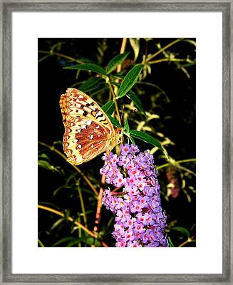 Butterfly Banquet 2 Framed Print by Will Borden
