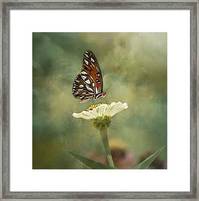 Butterfly Dreams Framed Print by Kim Hojnacki