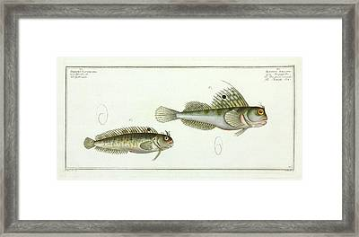 Butterfly Fish Framed Print by Natural History Museum, London