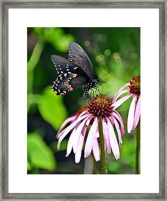 Butterfly In Black Framed Print by Marty Koch