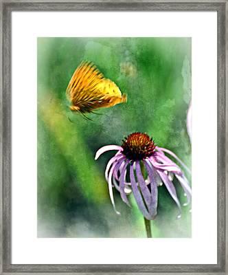 Butterfly In Flight Framed Print by Marty Koch