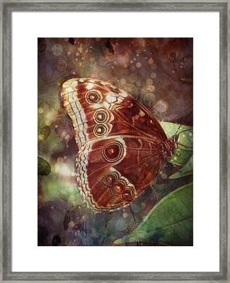 Butterfly In My Garden Framed Print by Barbara Orenya
