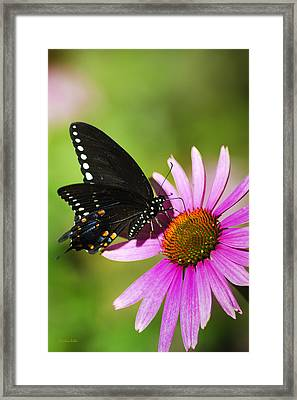 Butterfly In The Sun Framed Print by Christina Rollo