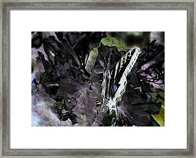 Butterfly In Violet Green And Black Framed Print by Belinda Greb