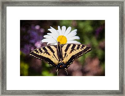 Butterfly Kisses Framed Print by Omaste Witkowski
