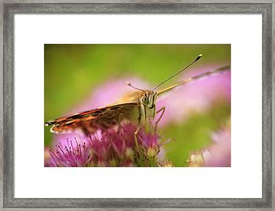 Butterfly Macro Framed Print by Adam Romanowicz