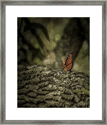 Butterfly Framed Print by Mario Celzner