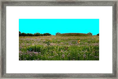 Butterfly Meadow Framed Print by Larry Trupp