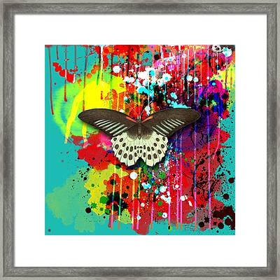 Butterfly Montage Framed Print by Gary Grayson