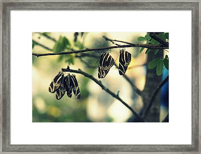 Butterfly Nap Framed Print by Laurie Perry