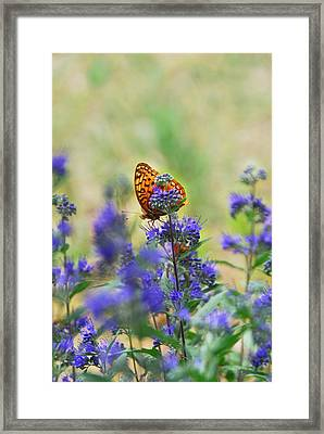 Butterfly On Catmint Flower Framed Print by Julie Magers Soulen