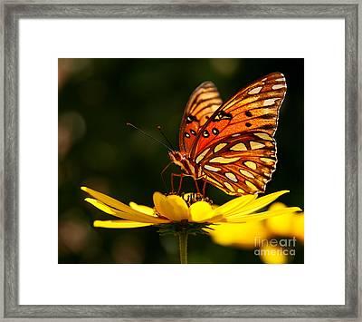 Butterfly On Flower Framed Print by Joan McCool