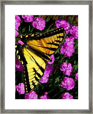 Butterfly On Pink Framed Print by Bill Caldwell -        ABeautifulSky Photography