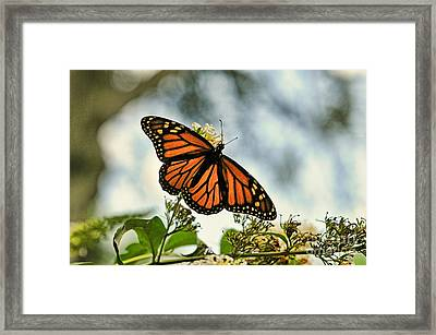 Butterfly - Open Wings Framed Print by Paul Ward