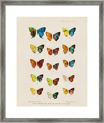 Butterfly Plate Framed Print by Pati Photography
