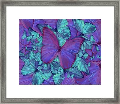 Butterfly Radial Violetmorpheus Framed Print by Alixandra Mullins