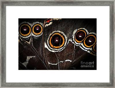 Butterfly Wing Framed Print by Elena Elisseeva