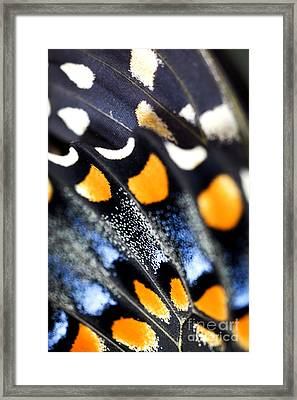 Butterfly Wings Framed Print by Iris Richardson