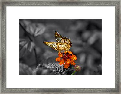 Butterfly Wings Of Sun Light Selective Coloring Black And White Digital Art Framed Print by Thomas Woolworth